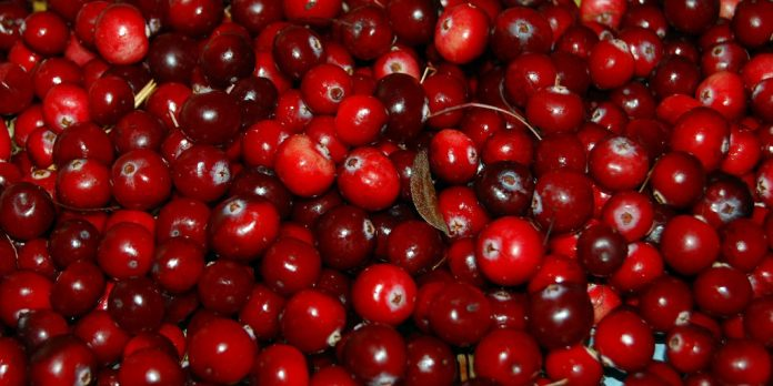 buah cranberries
