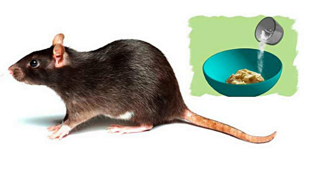 pengusir tikus