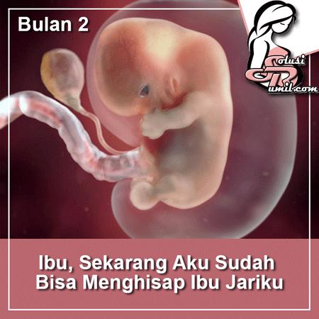 perkembangan janin bulan 2
